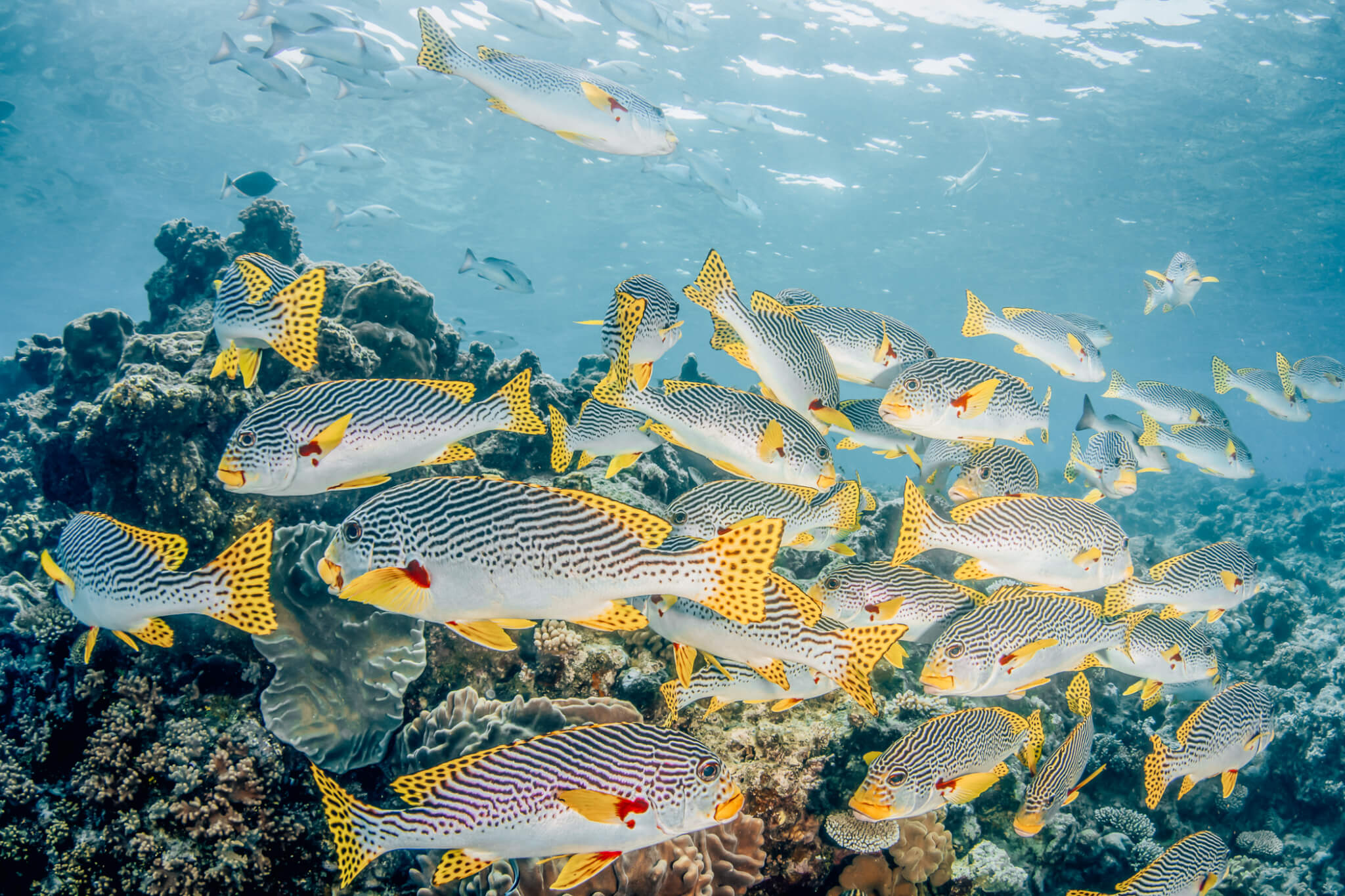 Vacation   Trip   Scuba   Bucket List   Cairns/Great Barrier Reef Travel Guide featured by top San Francisco travel blog What The Fab
