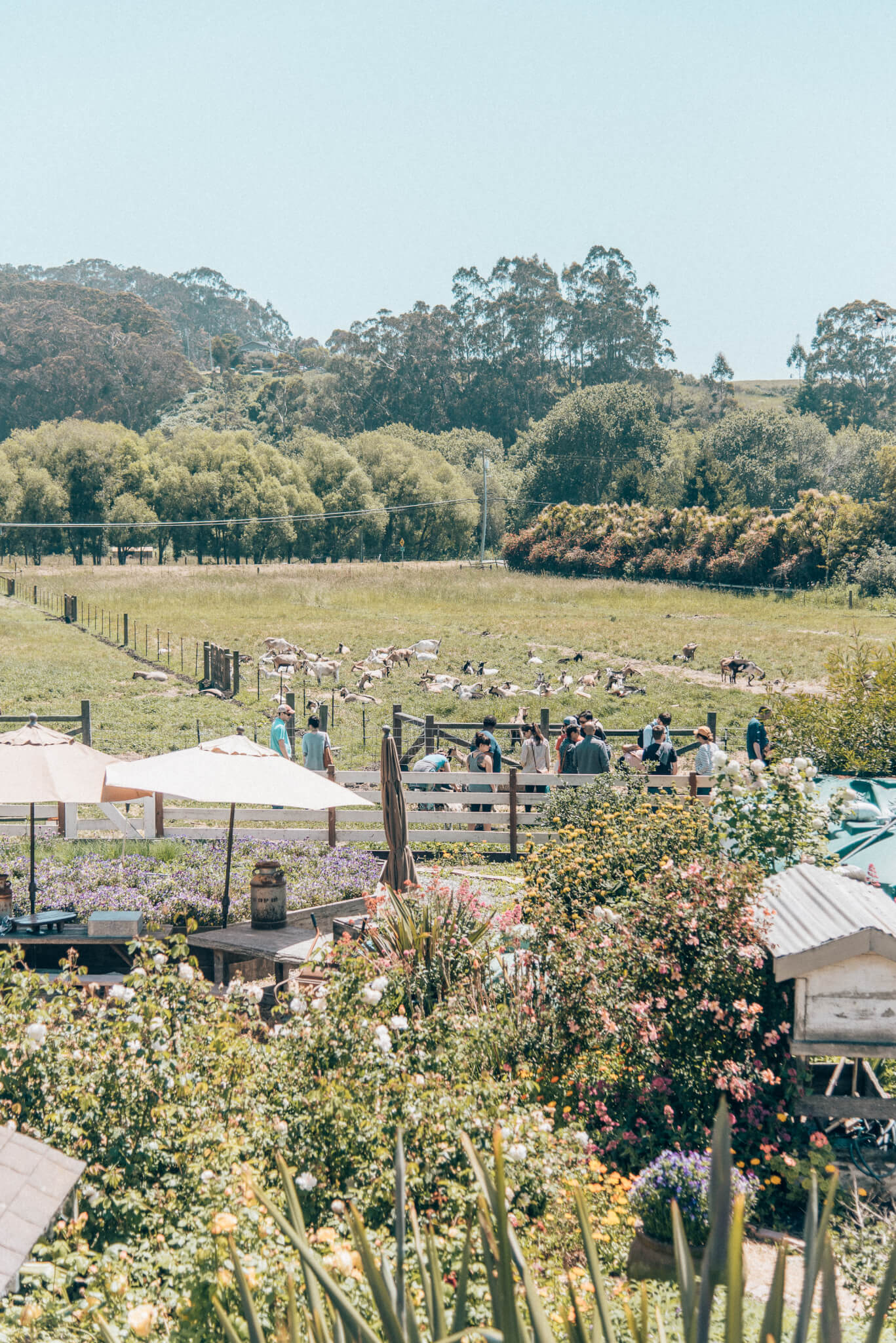 Things to do in Pescadero, featured by top San Francisco travel blog, What the Fab