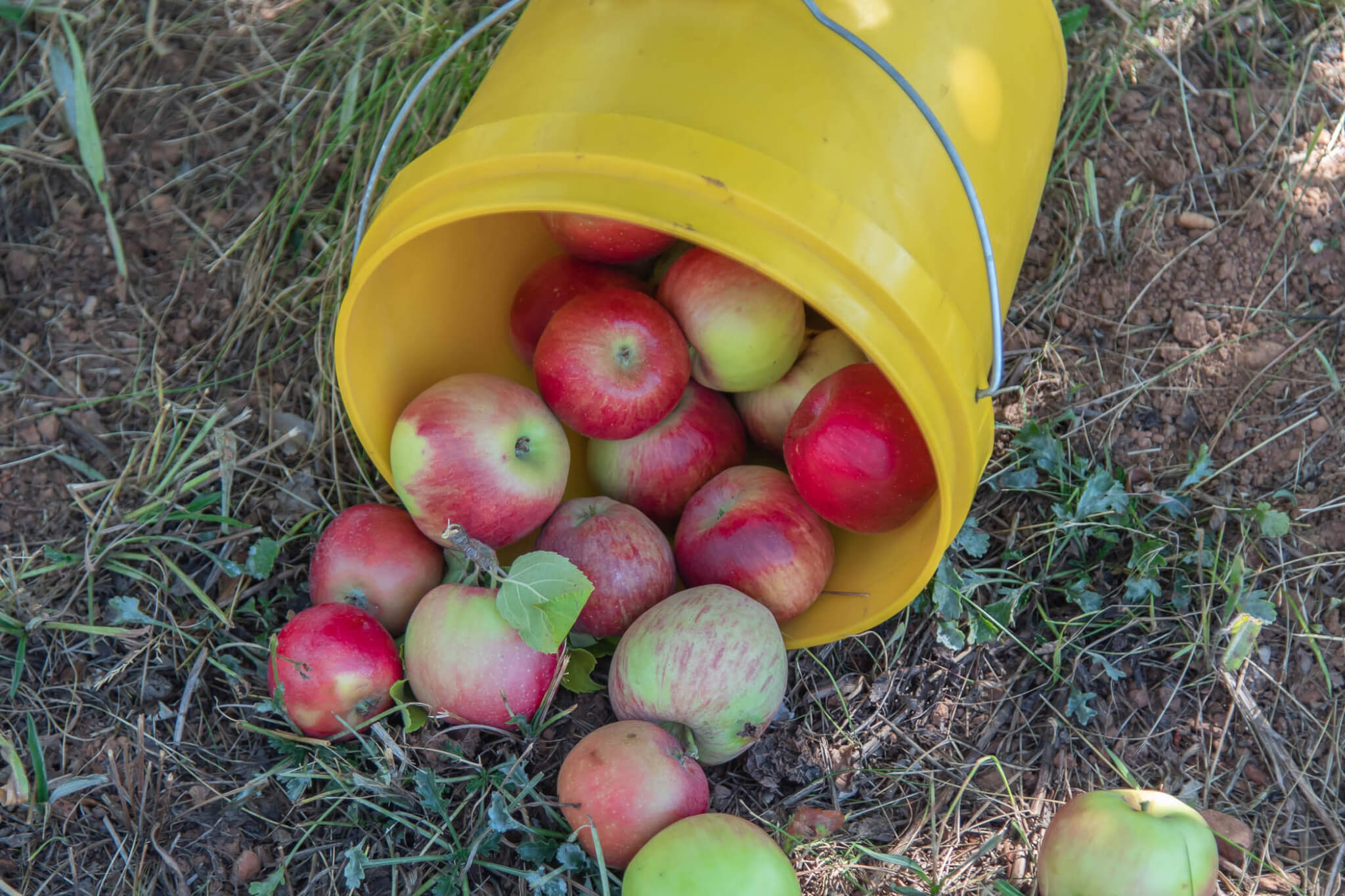 Apple Hill: All the Best Apple Hill Stops