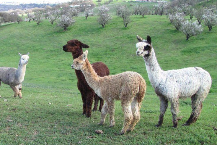 11. RV on Alpaca Ranch