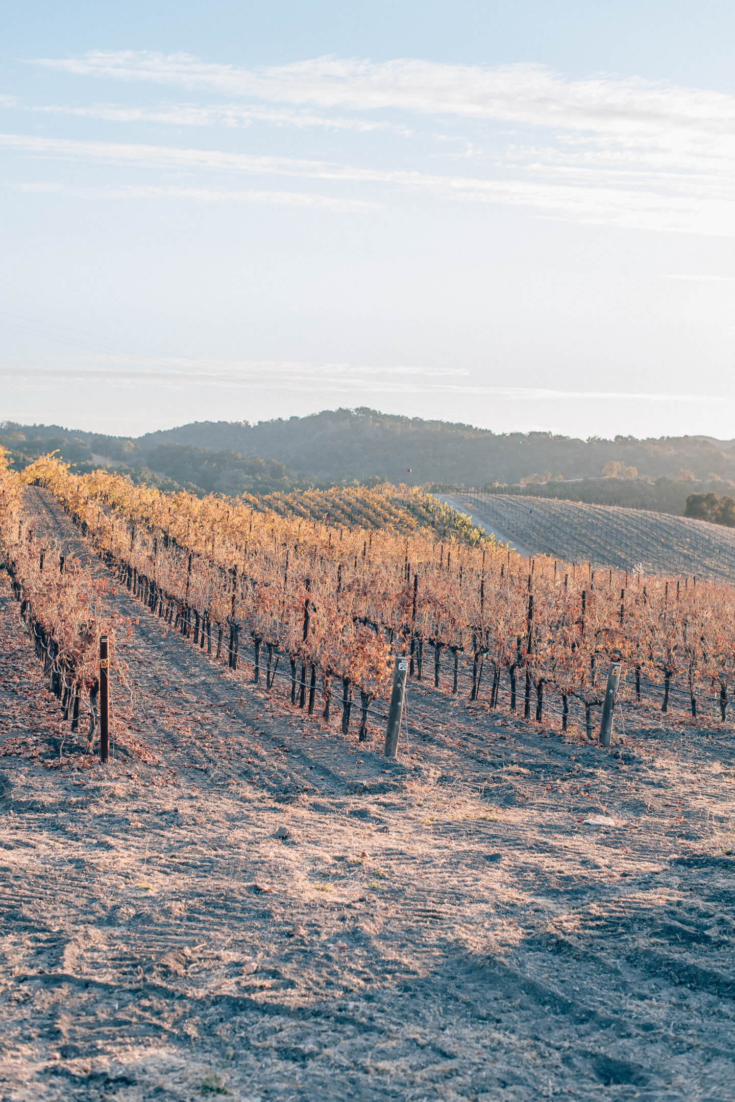 Things to do in Paso Robles, by travel blogger What The Fab