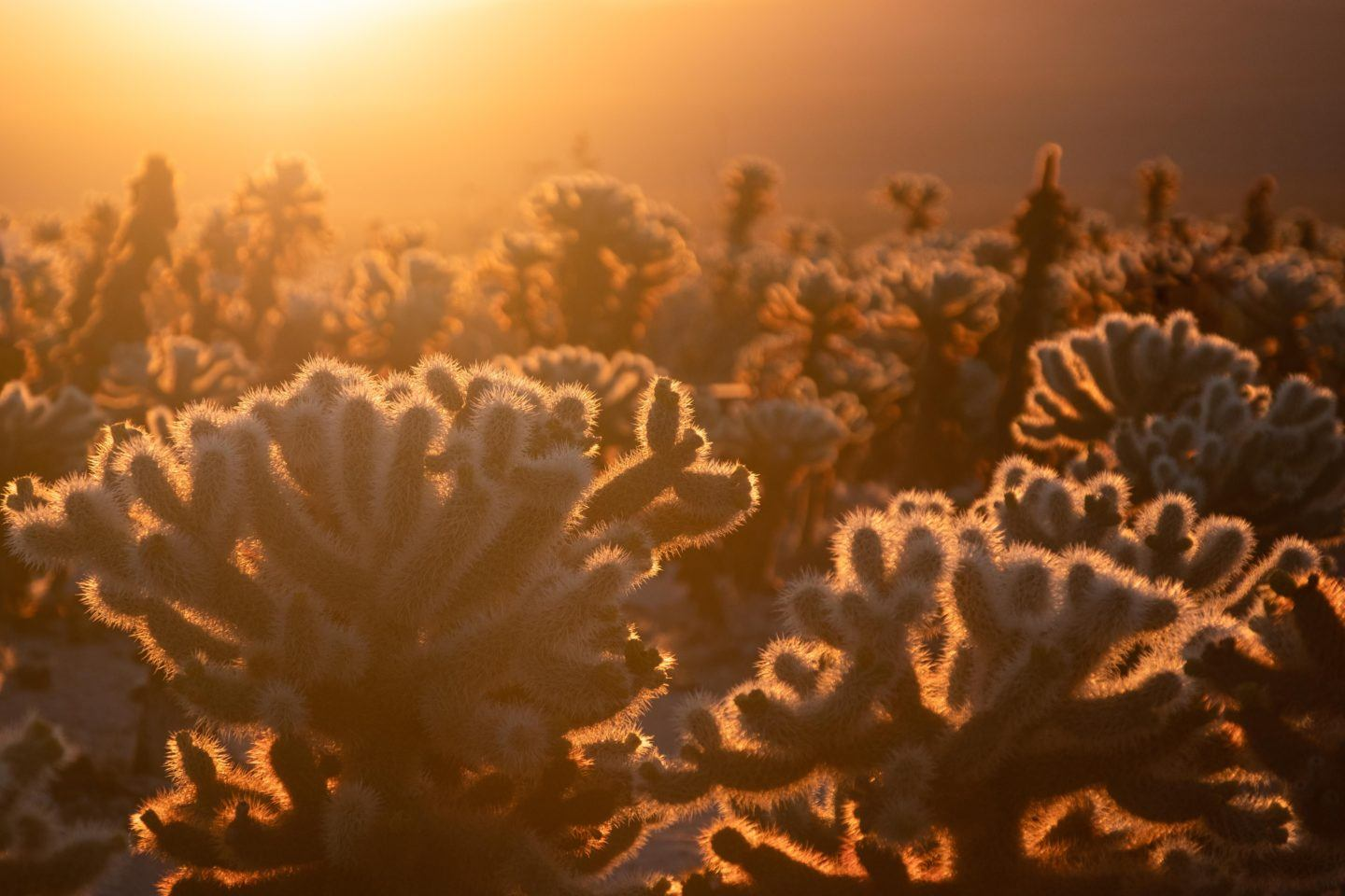 Best Hikes in Joshua Tree, by Travel Blogger What The Fab