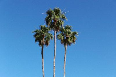 6 Day Trips from Palm Springs
