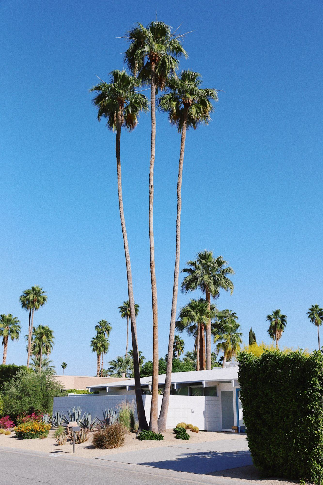 Day Trips From Palm Springs, by Travel Blogger What The Fab