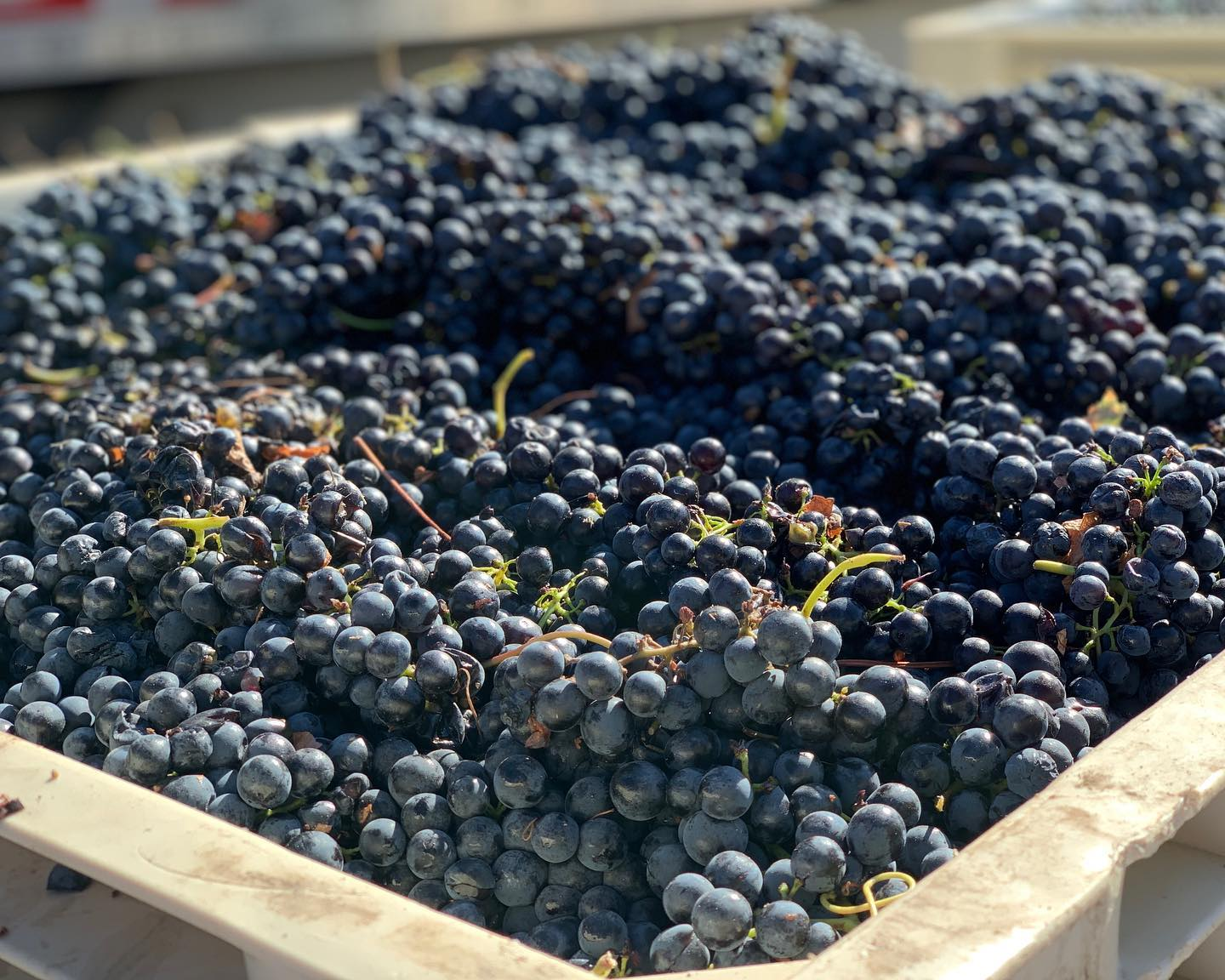 San Luis Obispo Wineries, by Travel Blogger What The Fab